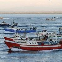 Visita guiada al puerto pesquero y a la subasta de pescado